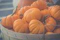 Autumn market with pumpkins Royalty Free Stock Photo