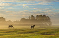 Autumn meadow horses in a foggy during an sunrise Stock Image