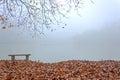 Autumn mist Royalty Free Stock Photo