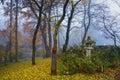 Autumn mist among trees Royalty Free Stock Photo