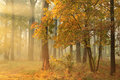 Autumn misty forest on sunrise Stock Images