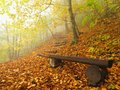The autumn misty and sunny daybreak at beech forest, old abandoned bench below trees. Fog between beech branches. Royalty Free Stock Photo