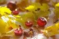 Autumn mood, autumn leaf fall Royalty Free Stock Photo