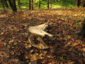Autumn moods in the northern bulgaria Royalty Free Stock Photo