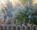 Autumn morning hoarfrost Royalty Free Stock Photography
