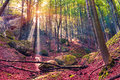 Autumn morning in mystical woods. Royalty Free Stock Photo