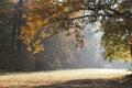 Autumn morning park