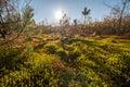 Autumn Moss Closeup Nature Bac...