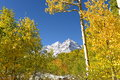 Autumn mountain aspen grove Arkivbild