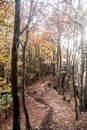 Autumn mountain forest with colorful trees, hiking trail, small rocks and fallen leaves