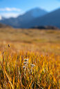 Autumn mountain meadow Royalty Free Stock Photos