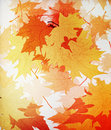 Autumn mpaple leaves background Stock Photography