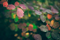 Autumn nature background with colorful leaves on branch. Soft focus Royalty Free Stock Photo