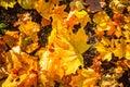 Autumn nature background. Royalty Free Stock Photo