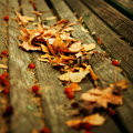 Autumn nature background Royalty Free Stock Photo