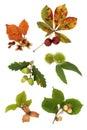 Autumn Nut Collection Stock Photo