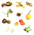 Autumn nuts, seeds, and fruits Stock Images