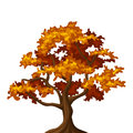 Autumn oak tree illustration of isolated on a white background Royalty Free Stock Image