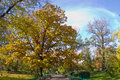 Autumn oak tree in a park Stock Photos