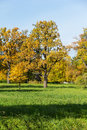 Autumn oak tree in the park Stock Photo