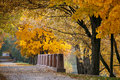 Autumn October colorful park. Foliage trees alley Royalty Free Stock Photo
