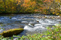 Autumn of Oirase Gorge in Aomori Pref. Royalty Free Stock Images