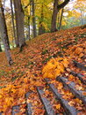 Autumn old stones stair and colorful trees Royalty Free Stock Photo