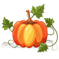 Autumn Orange Pumpkin Vegetable Royalty Free Stock Photo