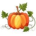 Autumn Orange Pumpkin Vegetable Royalty Free Stock Photo