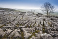 Autumn over limestone pavement malham yorkshire dales Stock Images