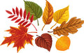 Autumn palette set of leaves over white background Stock Image