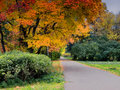 Autumn in park Royalty Free Stock Photos