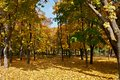 Autumn Park Foto de Stock Royalty Free