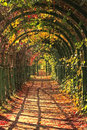Autumn in park alley Royalty Free Stock Images