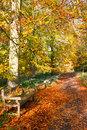 Autumn park alley Stock Photography