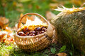 A basket with chestnuts Royalty Free Stock Photo