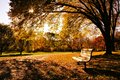 Autumn in the park bench a late day light Royalty Free Stock Images