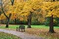 Autumn Park Bench Royalty Free Stock Photo