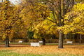 Autumn park benches golden colorful trees in with white Royalty Free Stock Images