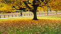 Autumn in the park brightly colored tree at london hyde with a man riding a bike background Royalty Free Stock Image