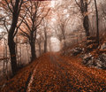 Autumn in the park of campo di fiori varese regional Royalty Free Stock Photography