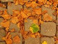 Autumn park cobble stone footpath with dry orange lime tree leaves colorful leaf Royalty Free Stock Images
