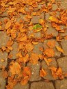 Autumn park cobble stone footpath with dry orange lime tree leaves colorful leaf Stock Image