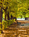 Autumn park colorful foliage in the Royalty Free Stock Image