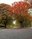 Autumn in park image with colored trees november season and red leafs Royalty Free Stock Photos