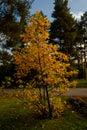 Autumn park landscape design Royalty Free Stock Photo