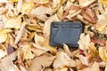 Men`s purse on yellow autumn leaves. In the park on the leaves is a purse with money. The wallet is lost. Found male partner Royalty Free Stock Photo