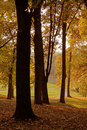 Autumn park in the morning Royalty Free Stock Photos