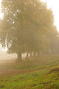Autumn park morning and mist in a golden Royalty Free Stock Photography