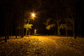 Autumn park at night. Glowing lights. Road with autumn leaves.
